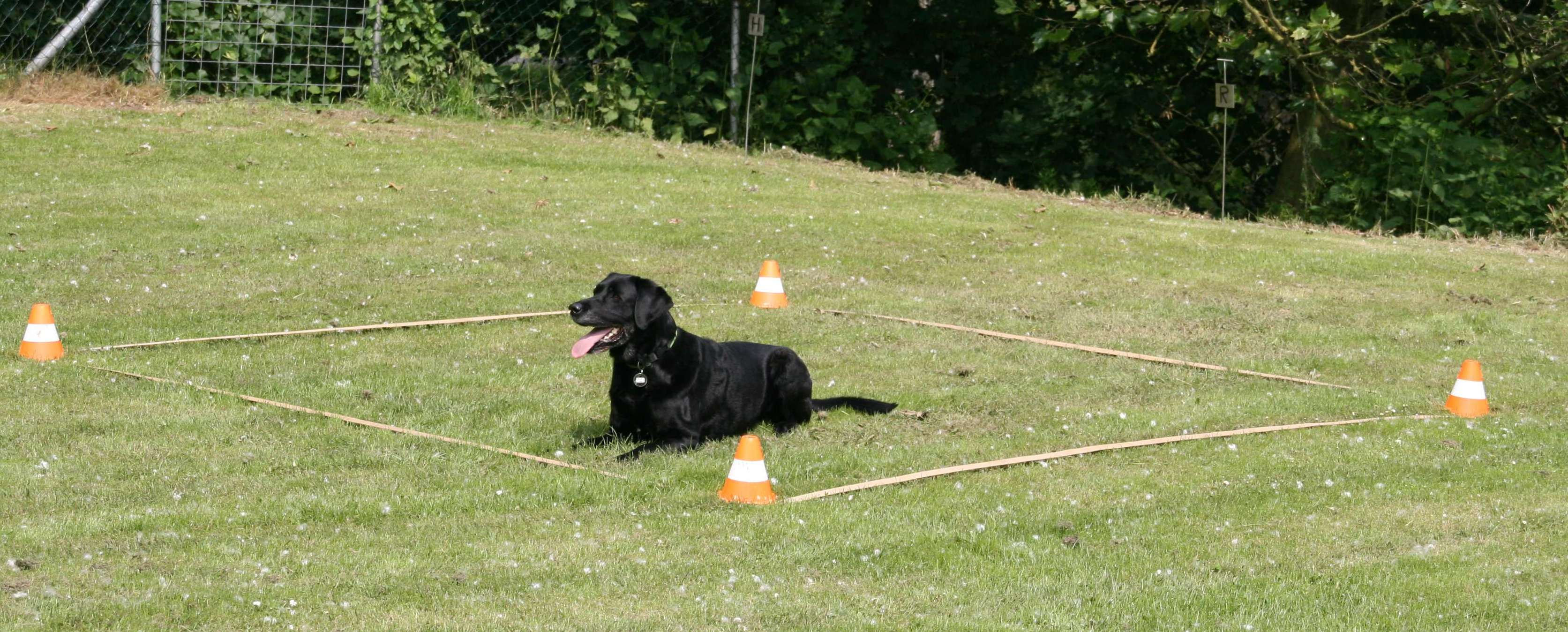 Photo of Obedience Prüfung am 21.09.2019 in Dahlsen